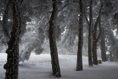 Деревья в снежке Стоковое фото RF