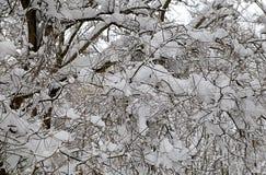 Деревья в снежке Стоковое Изображение RF