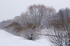 Деревья в снежке Стоковые Фотографии RF