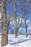 Деревья в снежном ландшафте в солнце после полудня стоковое изображение