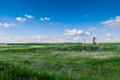 Деревья в степи Стоковая Фотография RF