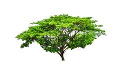 Деревья в тропическом северном Таиланде. Стоковая Фотография RF