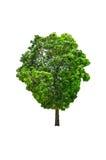 Деревья в тропическом северном Таиланде. Стоковое Изображение