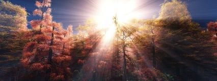 Деревья в тумане Лес осени в тумане стоковые изображения rf