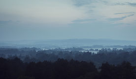 Деревья в тумане на ноче Стоковые Изображения RF