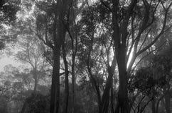 Деревья в тумане стоковые изображения rf