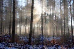 Деревья в тумане Стоковое фото RF