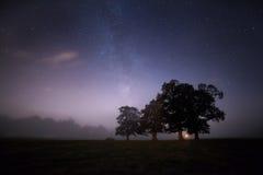 Деревья в туманном небе Стоковая Фотография RF