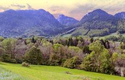 Деревья в французских Альпах стоковые изображения rf