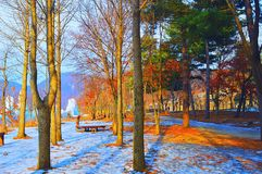 Деревья в холоде стоковая фотография