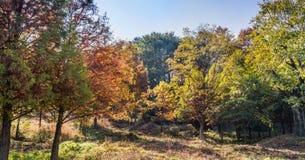 Деревья в цветах падения искупанных в солнечном свете Стоковые Фото