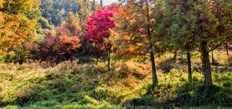 Деревья в цветах падения искупанных в солнечном свете Стоковое Изображение RF
