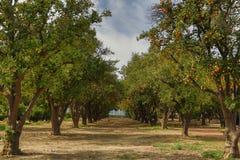 Деревья в цветени Стоковое Изображение RF