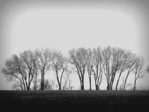Деревья в черно-белом Стоковые Фотографии RF