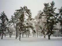 Деревья в шторме снега, снеге упакованном на хоботах стоковое фото