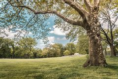 Деревья в Central Park, известном месте в Нью-Йорке Стоковые Фото