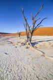 Деревья в Deadvlei, или мертвое Vlei, в Sossusvlei, в Namib-Nau Стоковая Фотография RF