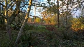 Деревья в Glade Стоковая Фотография