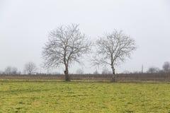 Деревья гайки Стоковое Изображение RF