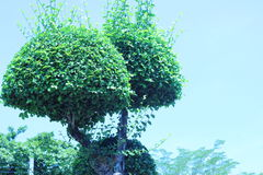 Деревья гнуть сад красивого украшения формы тенистый Стоковая Фотография