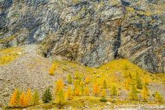 Деревья горы в осени Стоковая Фотография RF