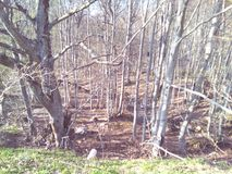 Деревья, горы, земля и природа шаг от рая Стоковое фото RF