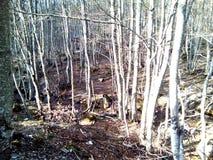 Деревья, горы, земля и природа шаг от рая Стоковые Фотографии RF