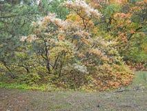 Деревья дыма в падении Стоковая Фотография RF