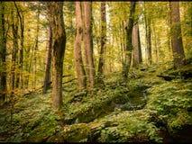 Деревья лета Стоковое фото RF