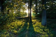 Деревья делая тени Стоковая Фотография RF