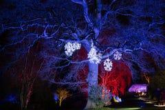 Деревья загоренные с красными, желтыми, и голубыми прожекторами стоковое изображение