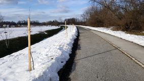 Деревья засаженные в ряд рядом с тротуаром на пасмурный зимний день Стоковые Изображения