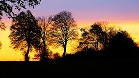 Деревья захода солнца Стоковое Изображение