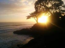 Деревья захода солнца тщательные в Калифорнии Стоковая Фотография