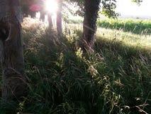 Деревья захода солнца Стоковое Изображение RF