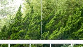 Деревья зеленого цвета леса в Японии Стоковое Фото