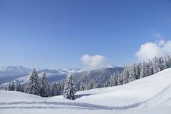 Деревья зимы в горах. Стоковые Изображения