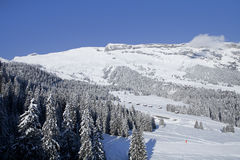 Деревья зимы в горах. Стоковые Фото