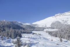 Деревья зимы в горах. Стоковое Изображение