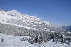 Деревья зимы в горах. Стоковое Изображение RF