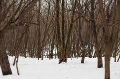 Деревья зимы в парке стоковые изображения
