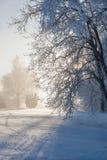 Деревья зимы в подсвеченном стоковое фото rf