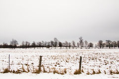 Деревья зимы в сельской местности Канады Стоковое Изображение RF