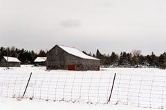 Деревья зимы в сельской местности Канады Стоковые Фотографии RF