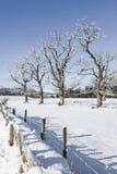 Деревья зимы в Strathdon в гористых местностях Шотландии Стоковые Фото