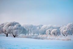 Деревья зимы на красивый холодный зимний день стоковая фотография rf