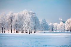Деревья зимы на красивый холодный зимний день стоковое фото