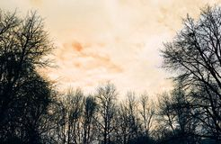 Деревья зимы на оранжевой предпосылке неба Стоковое Фото