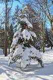 Деревья зимы покрытые с снегом против голубого неба Стоковые Изображения RF