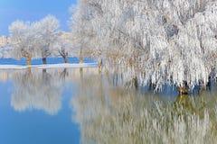 Деревья зимы предусматриванные с заморозком стоковое фото